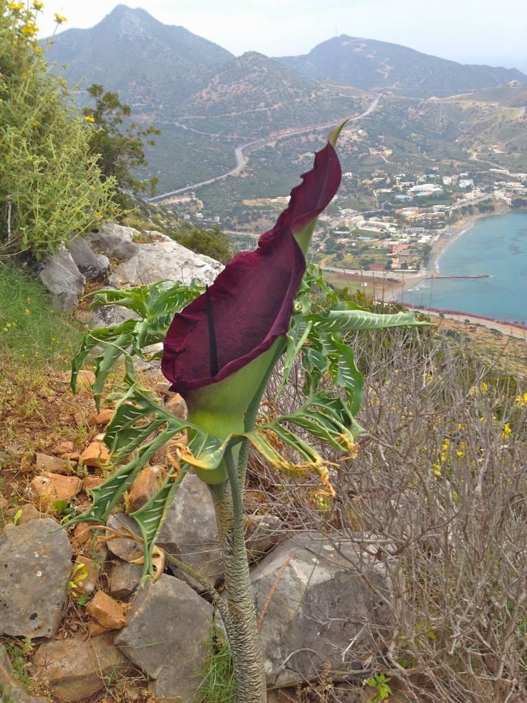 Странное растение