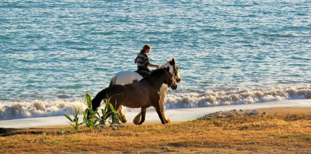 Лошади гуляют по острову Корфу