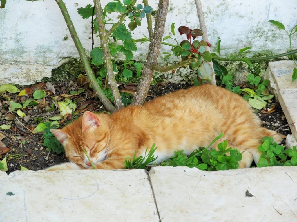 Кошка в монастыре