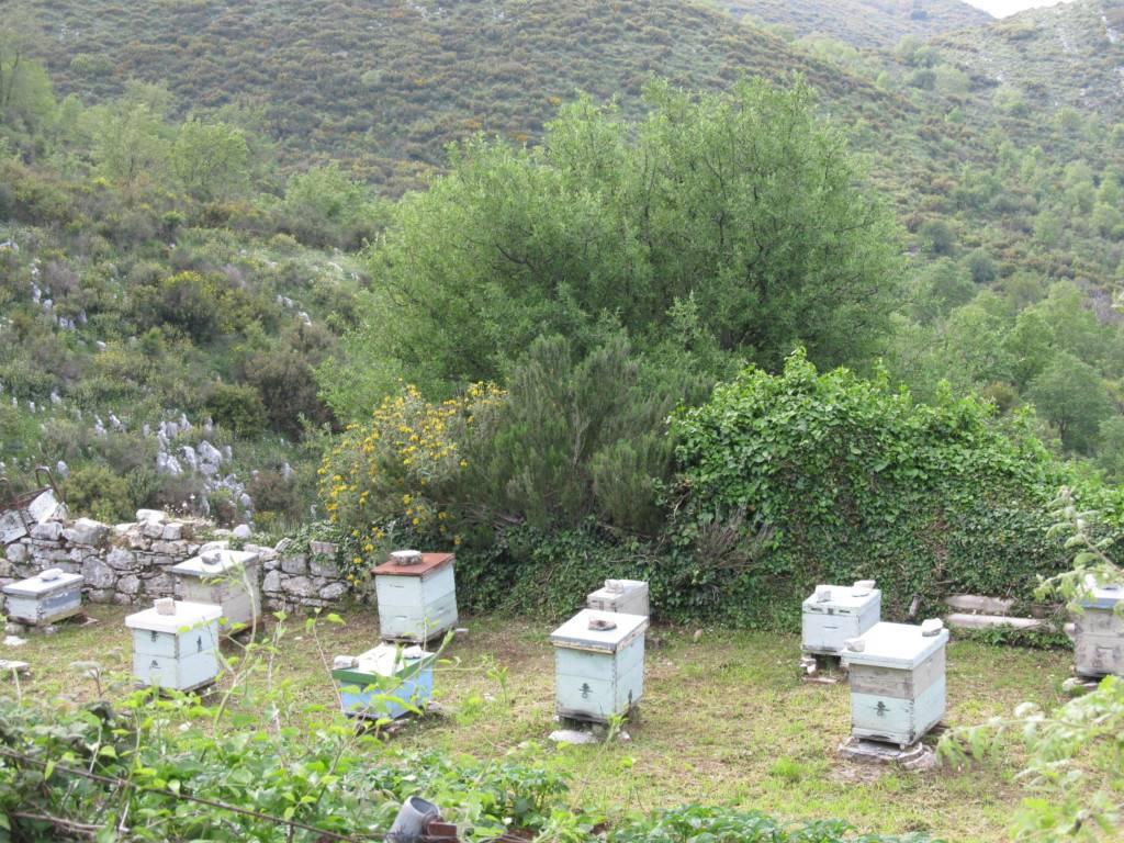 что привезти из Греции Мёд