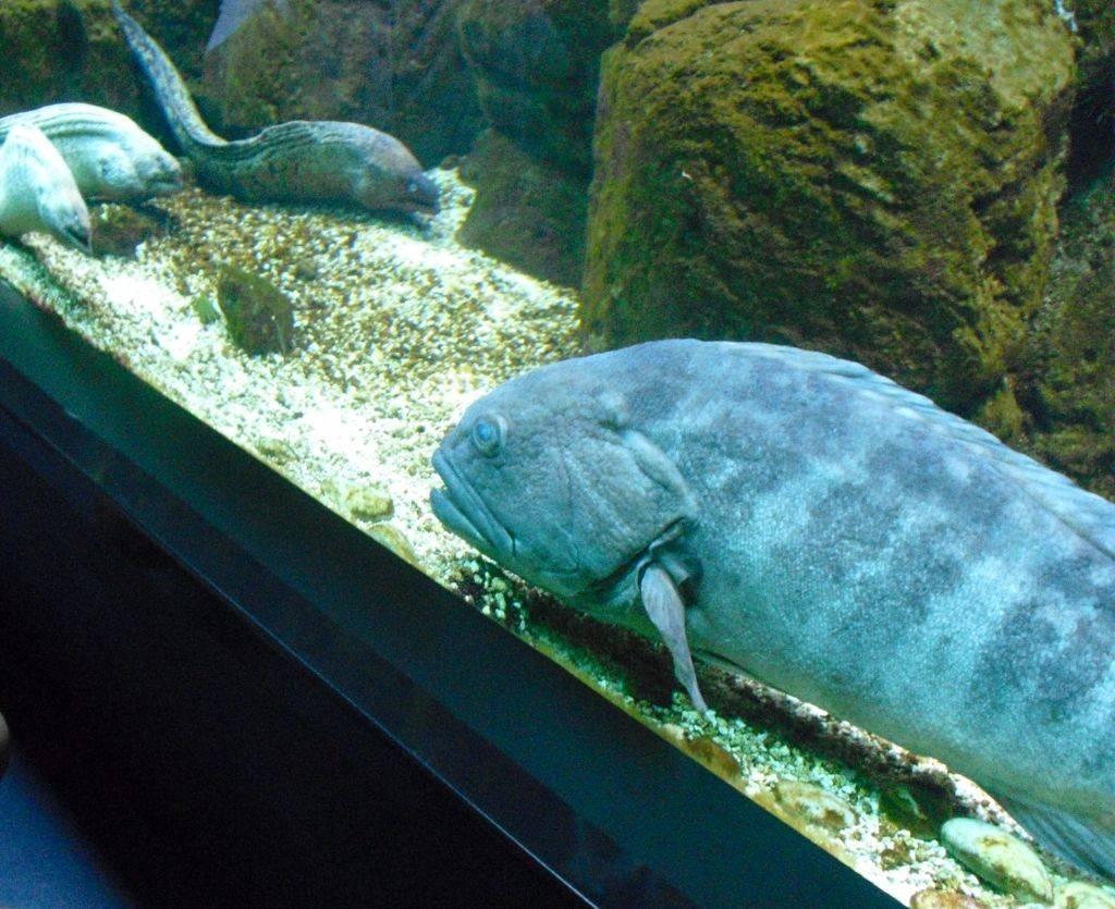 большущая рыбка