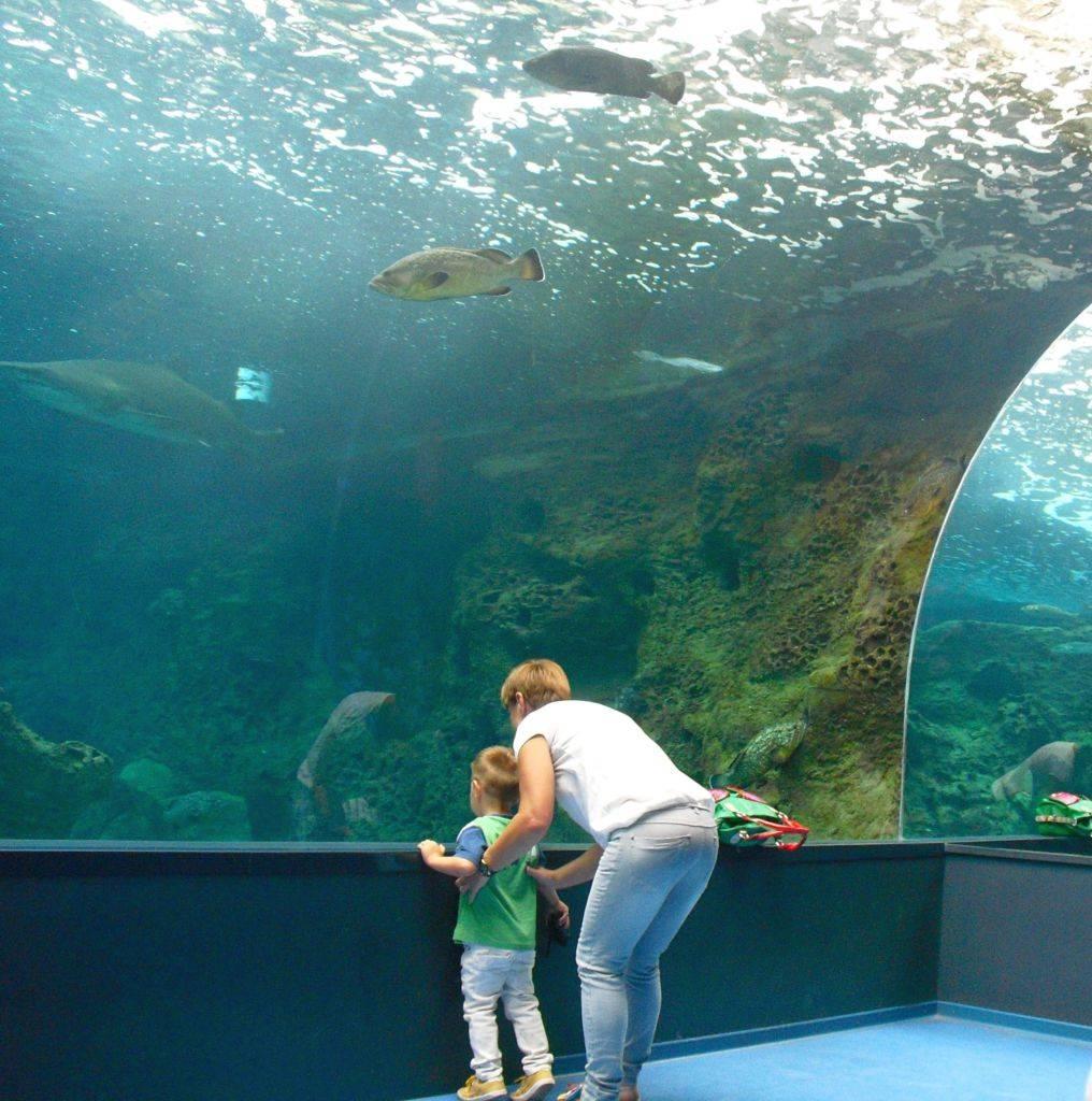малыш изучает рыбок