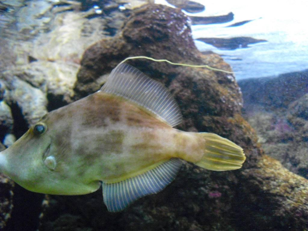 аквариум CRETAQUARIUM