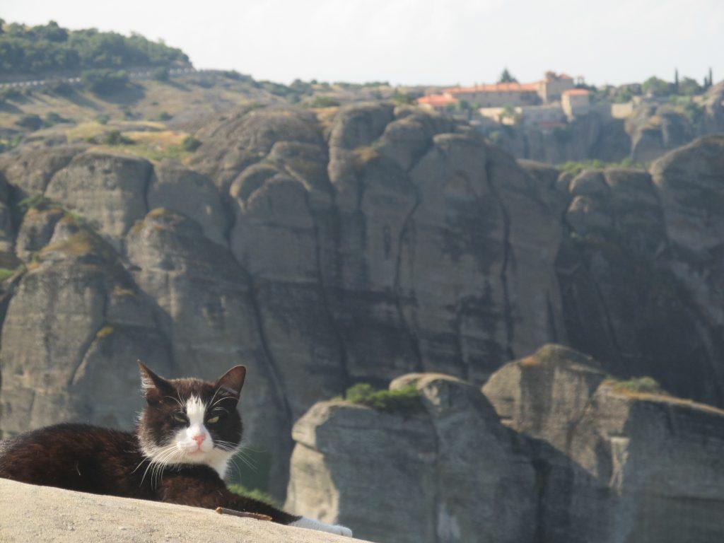 кот в Метеорах