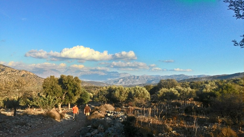 Along olive groves